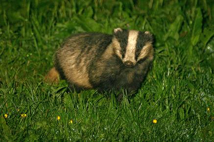 Mammal Group 87