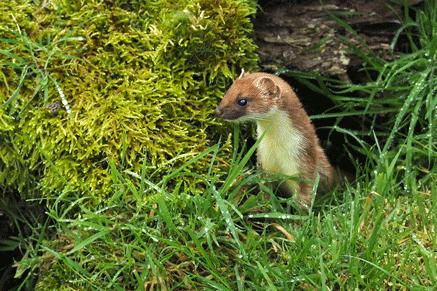 Mammal Group 20